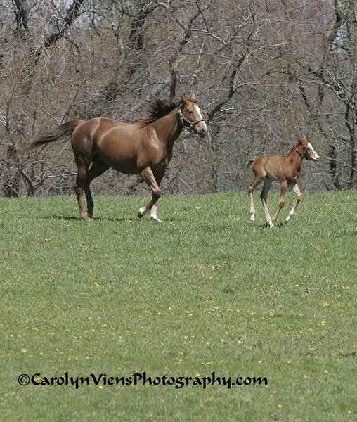 foal3 041708.jpg