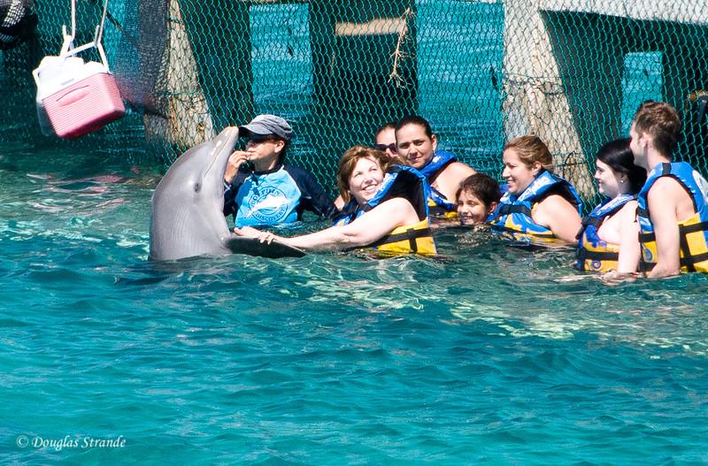 Dolphin encounter:  Louise