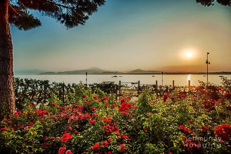 These beautiful rock rose borders are abundant throughout the Bella Italia Camping Park at Peschiera Del Garda.  This is a natural 7 shot HDR talen at sunrise.