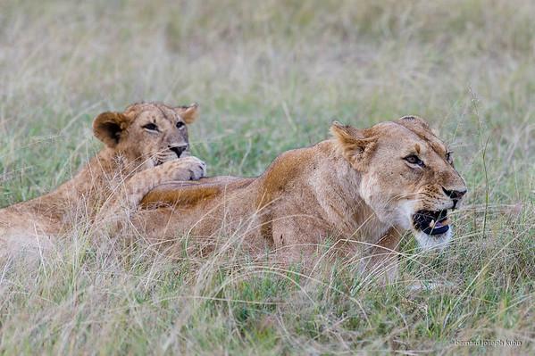 KENYA ET TANZANIE • KENYA AND TANZANIA
