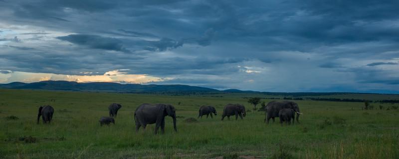 012_0510 Elephants 2.jpg
