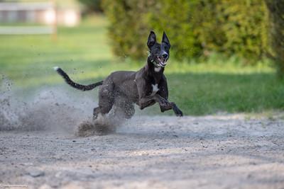 training westerlo 09-05-2018
