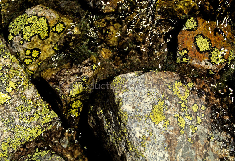 Green Aliens Sierra Nevada Mountains, CA.