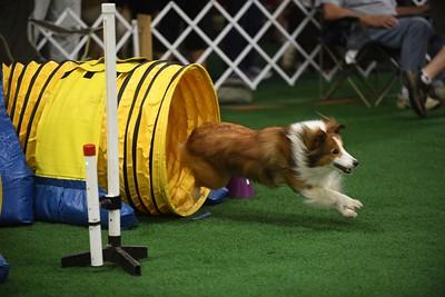 Princeton Dog Training Club AKC Agility Trial September 15-16