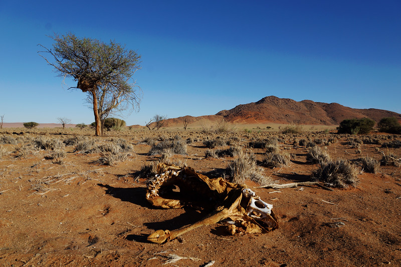 Death in the Nabib Desert