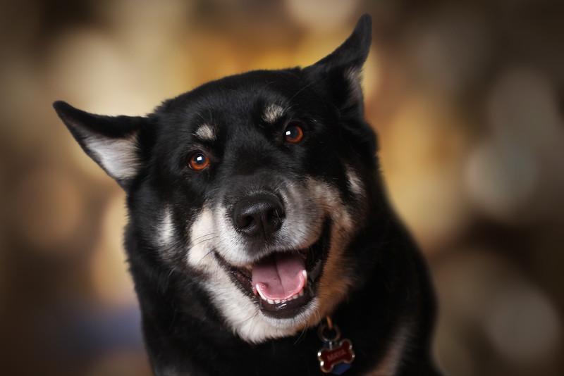 gros-chien-1.jpg