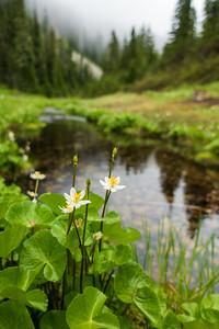 2019-07-06 - Alta Mountain, Rampart Ridge, Margaret, Lillian, and Rampart Lakes