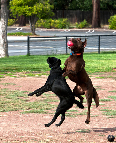 riley-brodie-jump.jpg