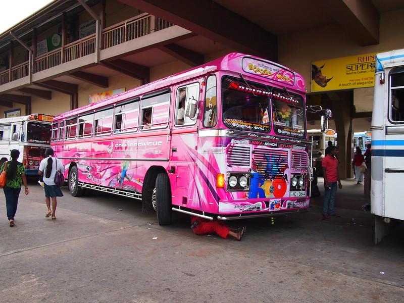 P2178646-pink-bus.JPG