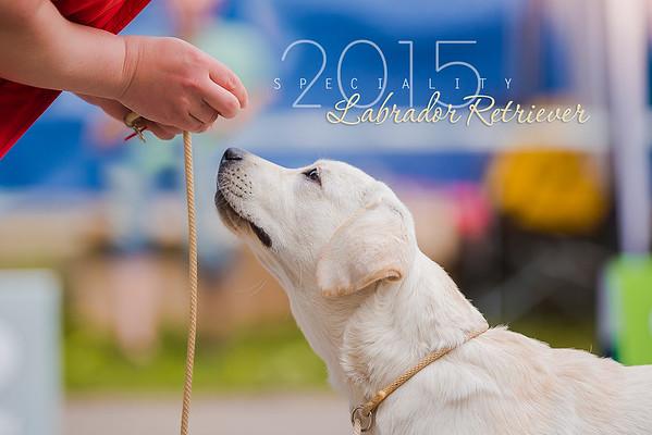 Labrador Retriever Specialty, 24.05.2015