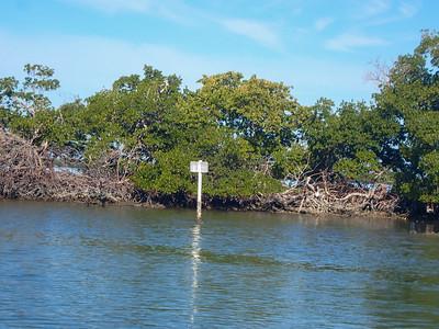 Essence of an Estuary Eco Cruise - Mellish, Carroll & Rubino