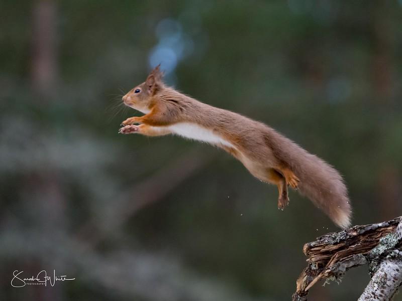 RedSquirrelBootCamp_120217_509.jpg
