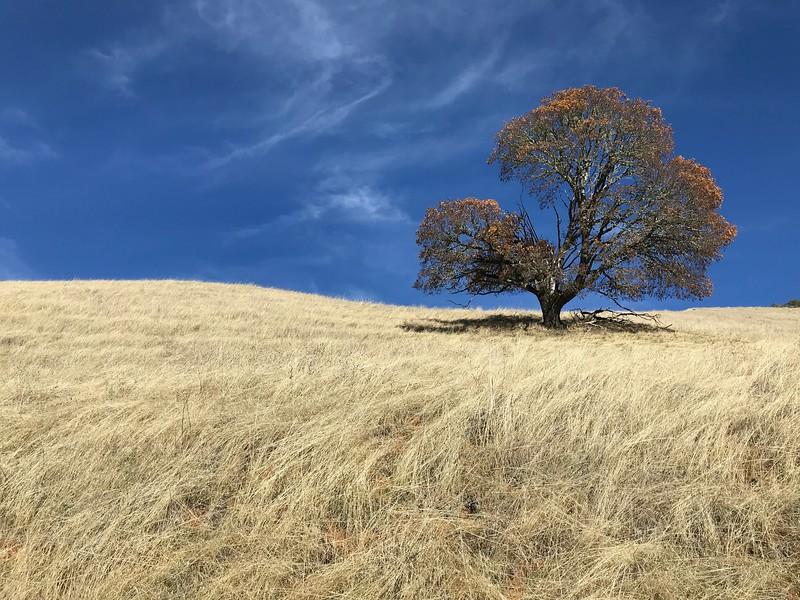 Tree in Repose