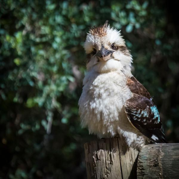 011119 birds  _6.JPG