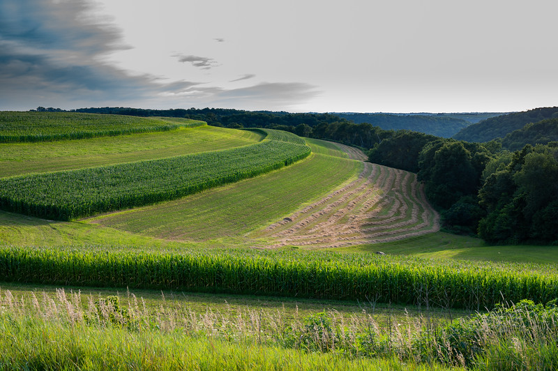 07-30-2020-farm.jpg