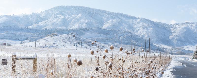 snow-01154.jpg