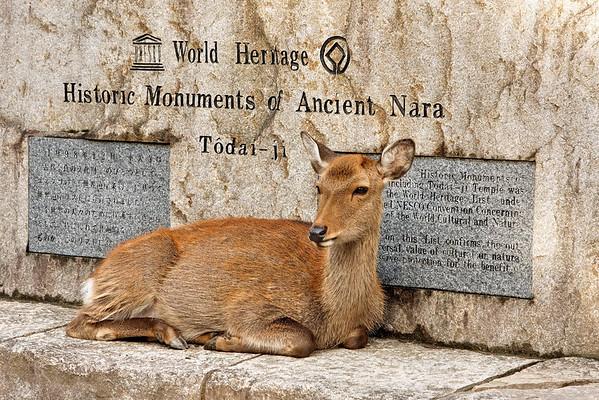 Nara - Parc de Nara
