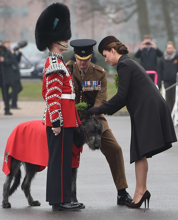 . Britain\'s Catherine, Duchess of Cambridge (R) prepares a sprig of shamrock to attach to Irish Wolfhound Donal, the regimental mascot, while visiting the Irish Guards during a St Patrick\'s Day parade in Mons Barracks in Aldershot, west of London, on March 17, 2015. Britain\'s Prince William attended the parade as Colonel of the Regiment and Britain\'s Catherine presented the traditional sprigs of shamrocks to the officers and guardsmen of the regiment. AFP PHOTO / POOL / EDDIE  MULHOLLAND/AFP/Getty Images