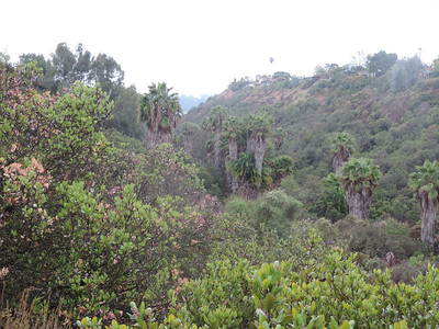 Ruffin Canyon Open Space  2-07-2014
