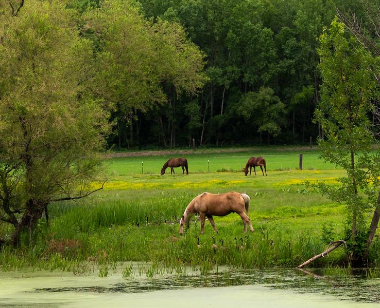 06-20-2020-horses-2.jpg