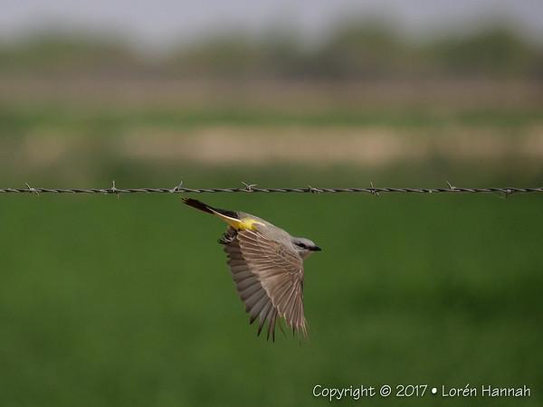 6K Photos - Small Birds - Spring 2017