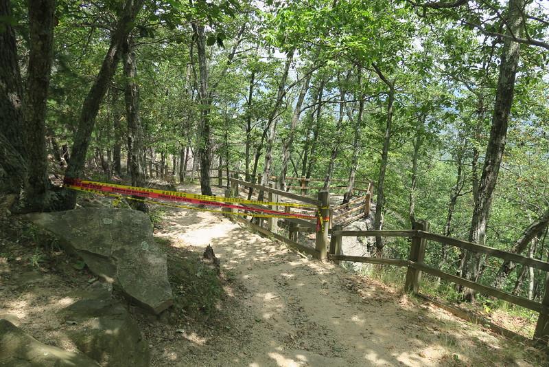 Sassafras (TRACK) Trail