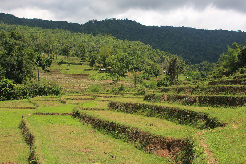 Terraced land used for growing rice
