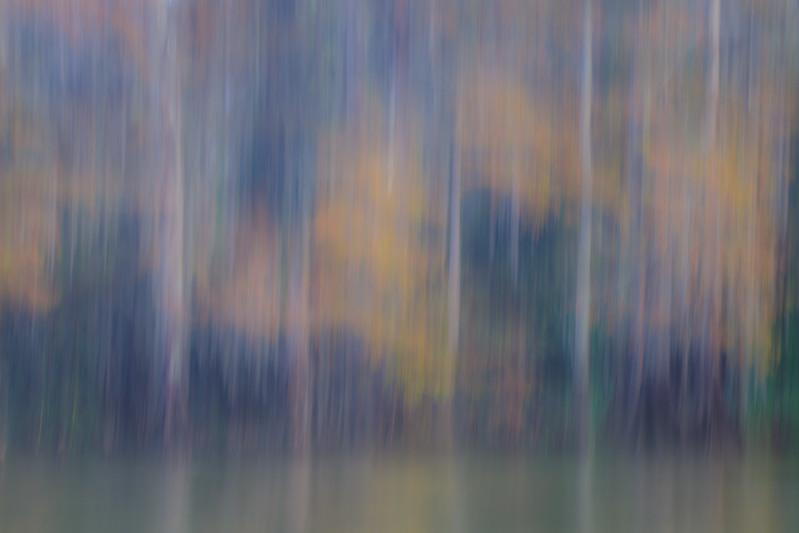Cypress_Swamps_1117_PSokol-2237.jpg
