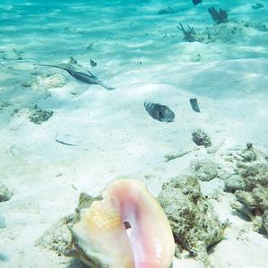 Grand Cayman  Under Water