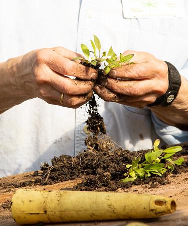 Plant Transplanting