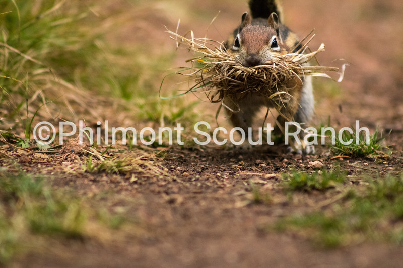 2017_FirstPlace_Animals and Wildlife_TimothyDoherty_Busy_Clear Creek_863.JPG