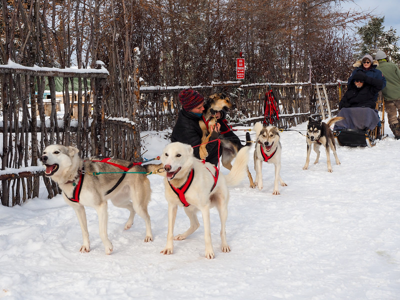 Dogsledding with Wapusk Adventures