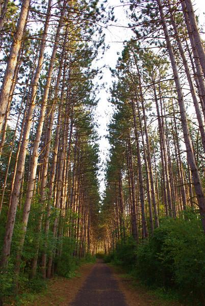 Trails.....