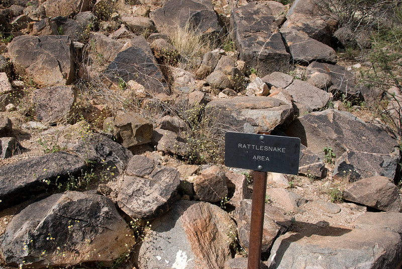 We take a short hike in the Saguaro National Park, and find the area of rattlesnakes.