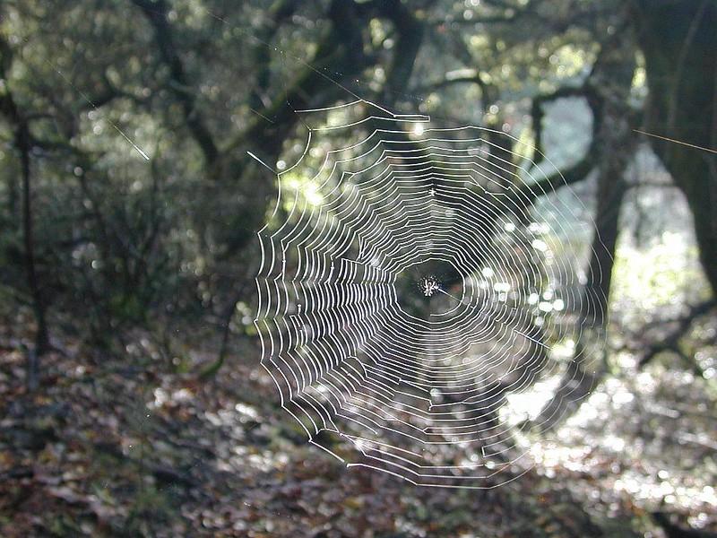 spiderweb_113358677_o.jpg