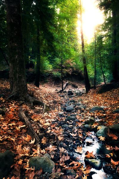 Glowing Forest.jpg