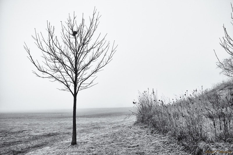Fog Isolation