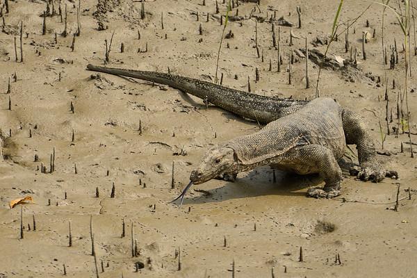 Sundarbans-Oct-2016