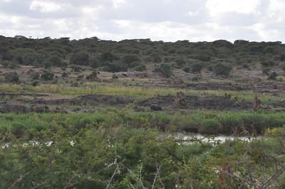 Kruger waterholes