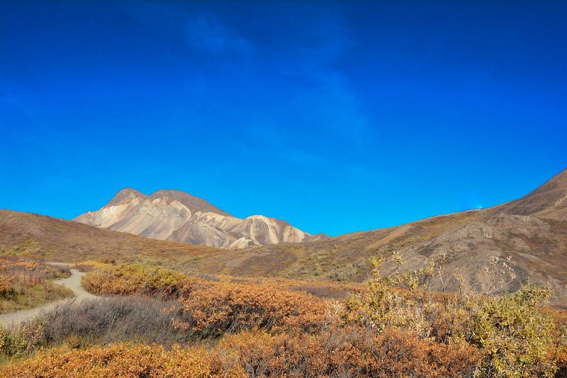 Denali-National-Park-79.jpg
