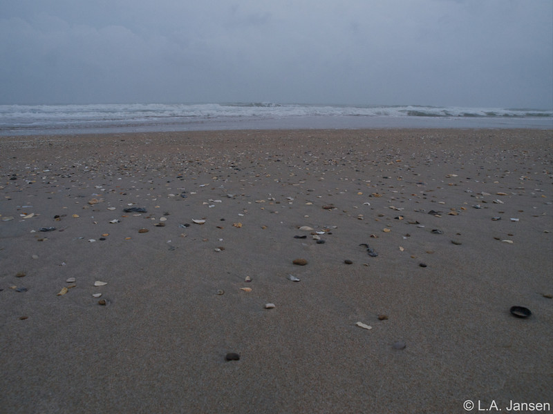 Shell-covered beaches