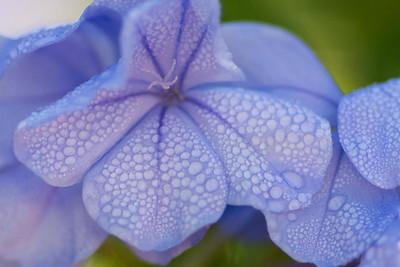 Blue Morning 2013
