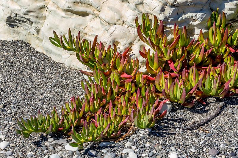 Eine der wenigen Pflanzen in dieser heissen, steinigen Umgebung