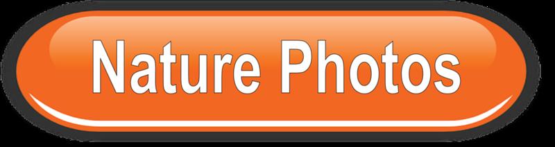 Folder Button - Nature Photos.png
