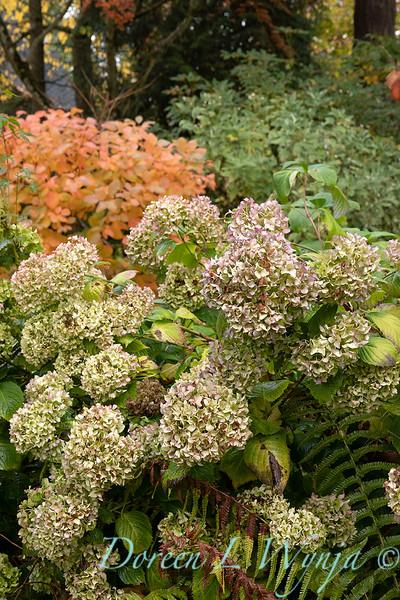 Dietrick fall garden_2069.jpg
