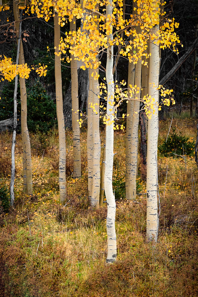 ©2020 Dennis A. Mook; All Rights Reserved; Tree Project--18.jpg