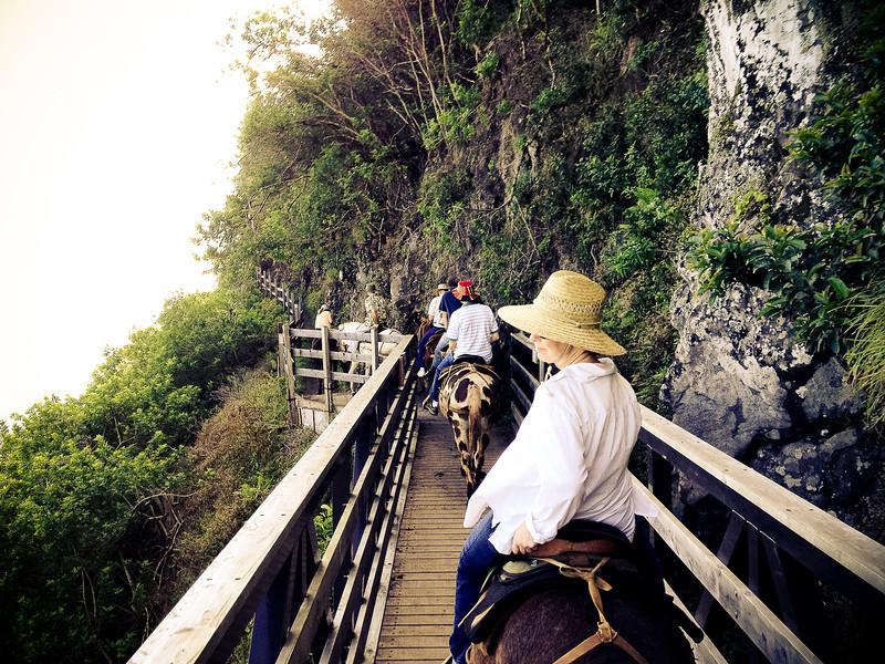mule bridge.jpg