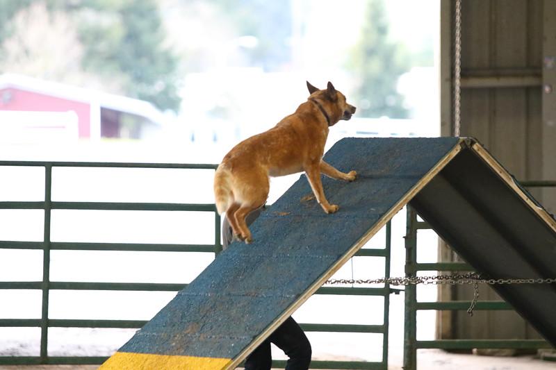 3-10-2019 Bloodhound-9110.jpg