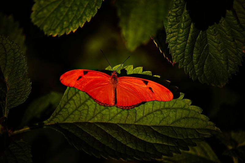 Butterfly-111.jpg