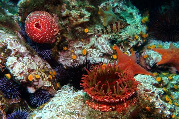 Naples Reef, October 2013